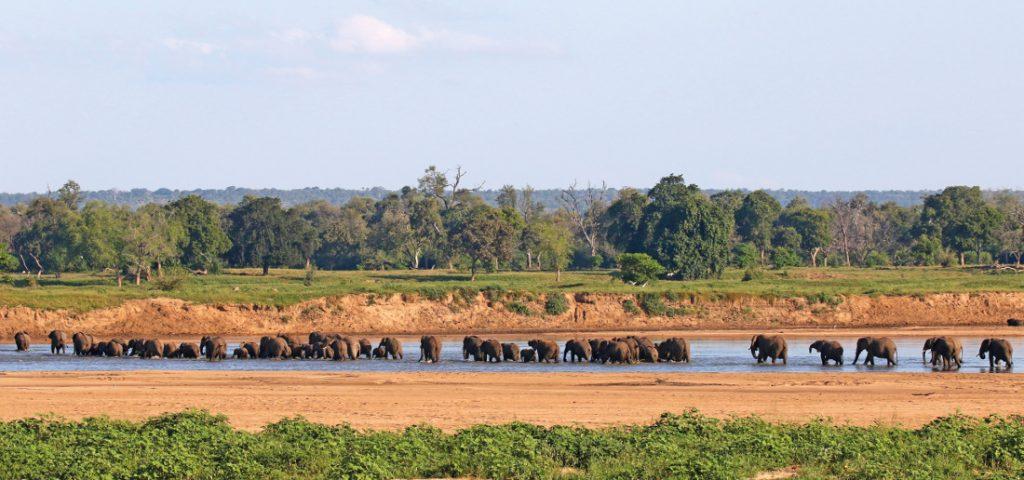 Simbabwe Gonarezhou National Park Save Fluss Elefanten Iwanowskis Reisen - afrika.de