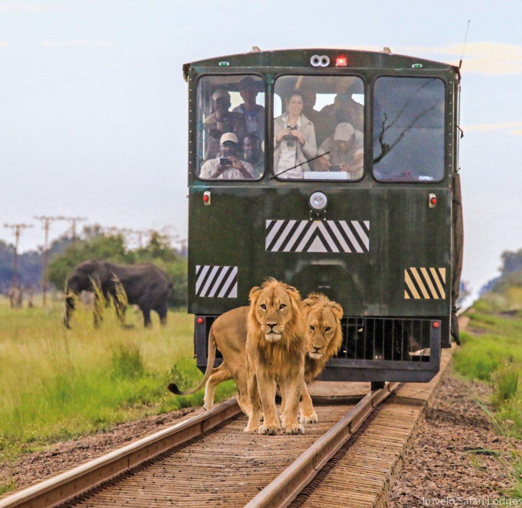 Simbabwe Hwange National Park Elephant Express Iwanowskis Reisen - afrika.de