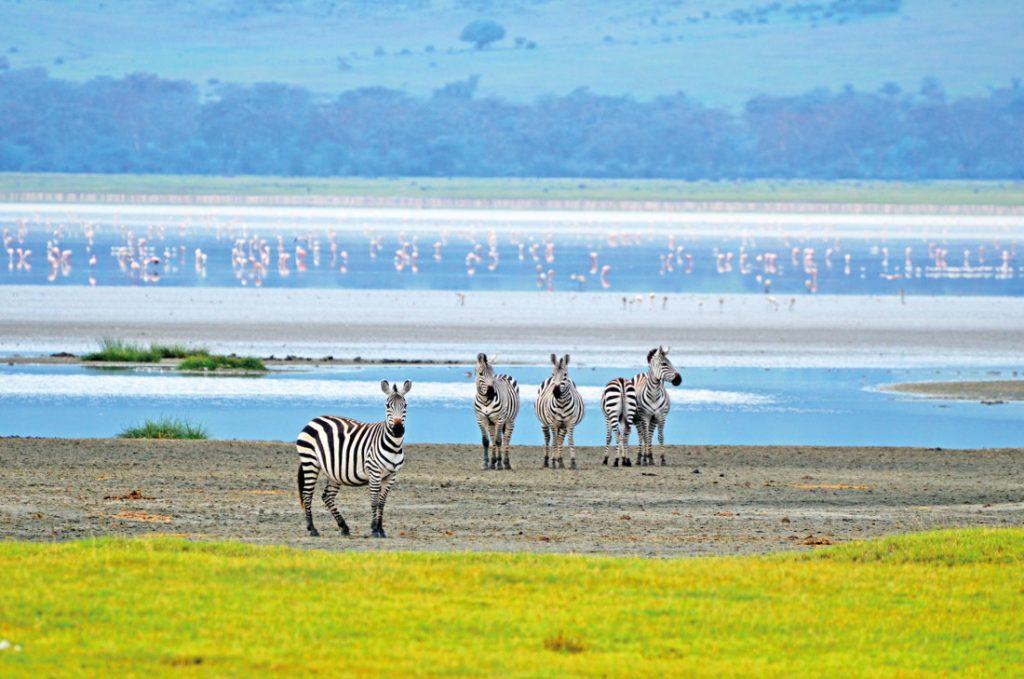 Kenia Tansania Ostafrika Explorer Safari Ngorongoro Krater Zebras Iwanowskis Reisen - afrika.de