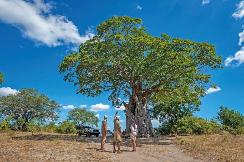 Malawi Liwonde National Park Kuthengo Camp Pirschfahrt Iwanowskis Reisen - afrika.de