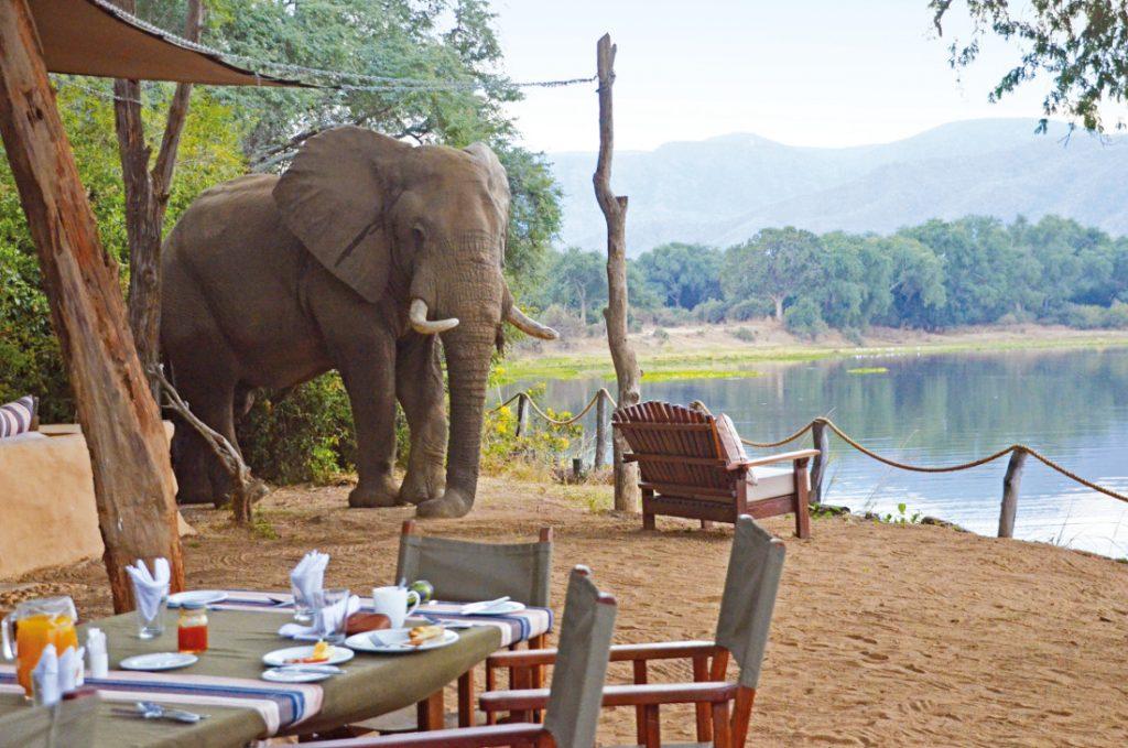 Sambia Elefant Camp Iwanowskis Reisen - afrika.de