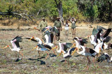 Sambia South Luangwa National Park Luangwa River Camp Fußpirsch Iwanowskis Reisen - afrika.de