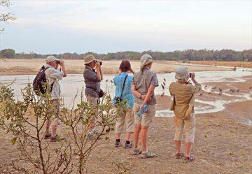 Sambia Camping Wander Safari Wildtierbeobachtung Luangwa Fluss Iwanowskis Reisen - afrika.de