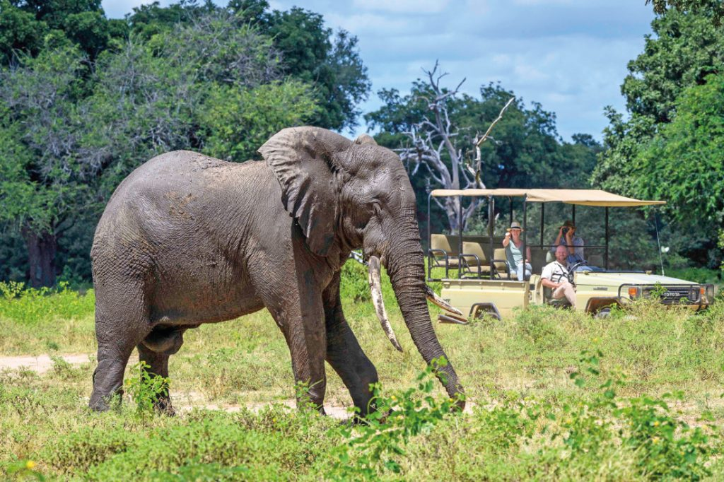 Simbabwe Mana Pools National Park John's Camp Pirschfahrt Iwanowskis Reisen - afrika.de