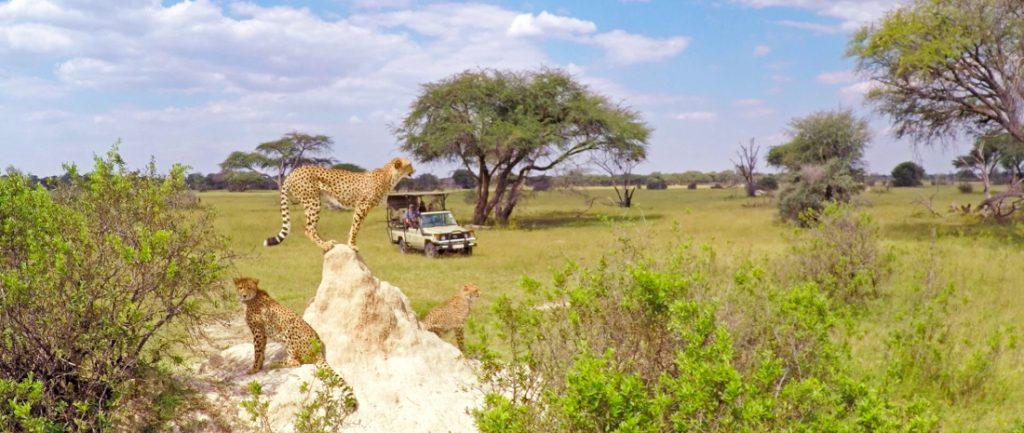 Simbabwe Hwange National Park The Hide Pirschfahrt Iwanowskis Reisen - afrika.de