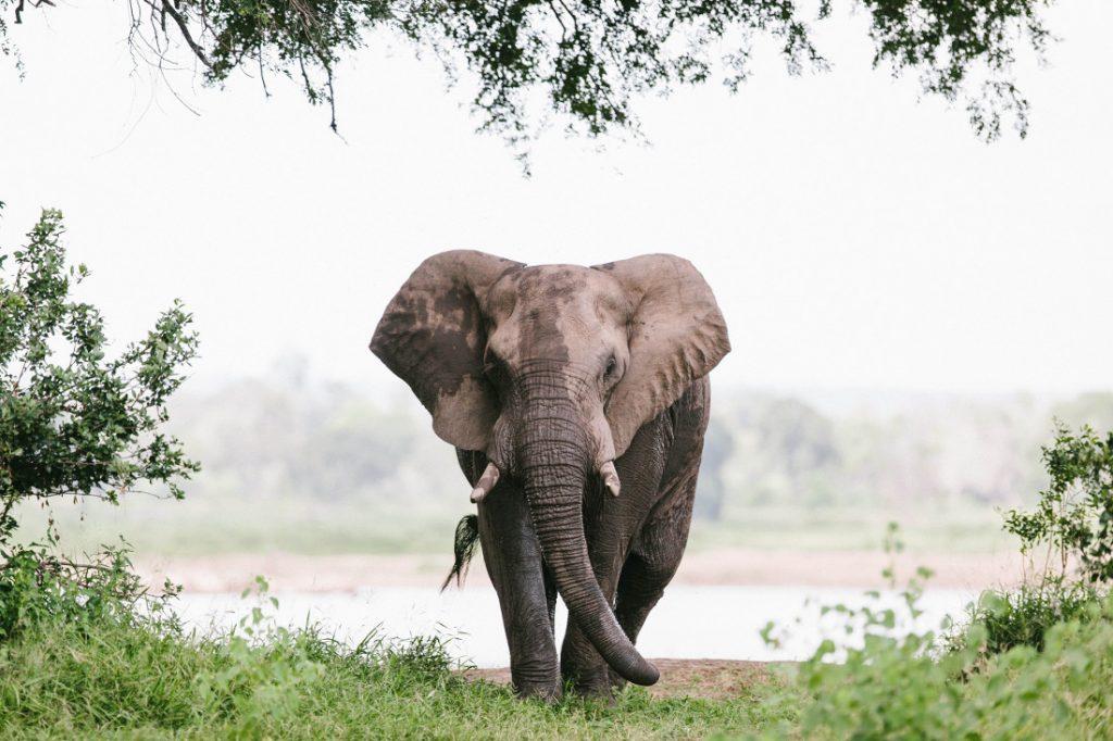 Simbabwe Gonarezhou National Park Elefant Iwanowskis Reisen - afrika.de