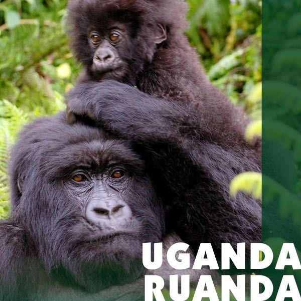 Reiseziel Uganda + Ruanda - Iwanowskis Reisen