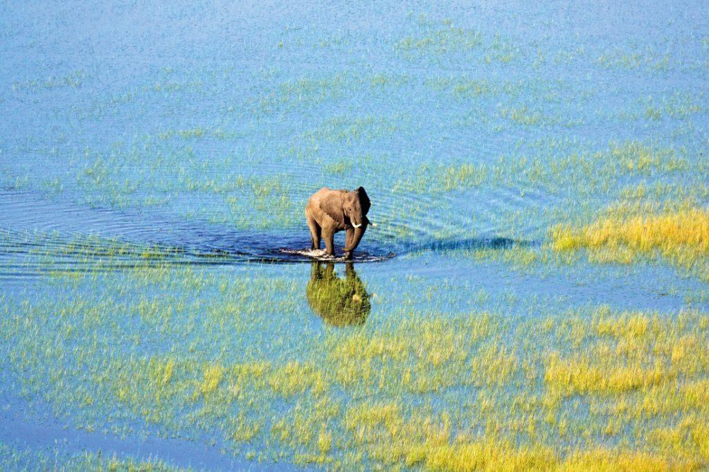 Botswana Okavango Delta Setari Camp Elefant Iwanowskis Reisen - afrika.de