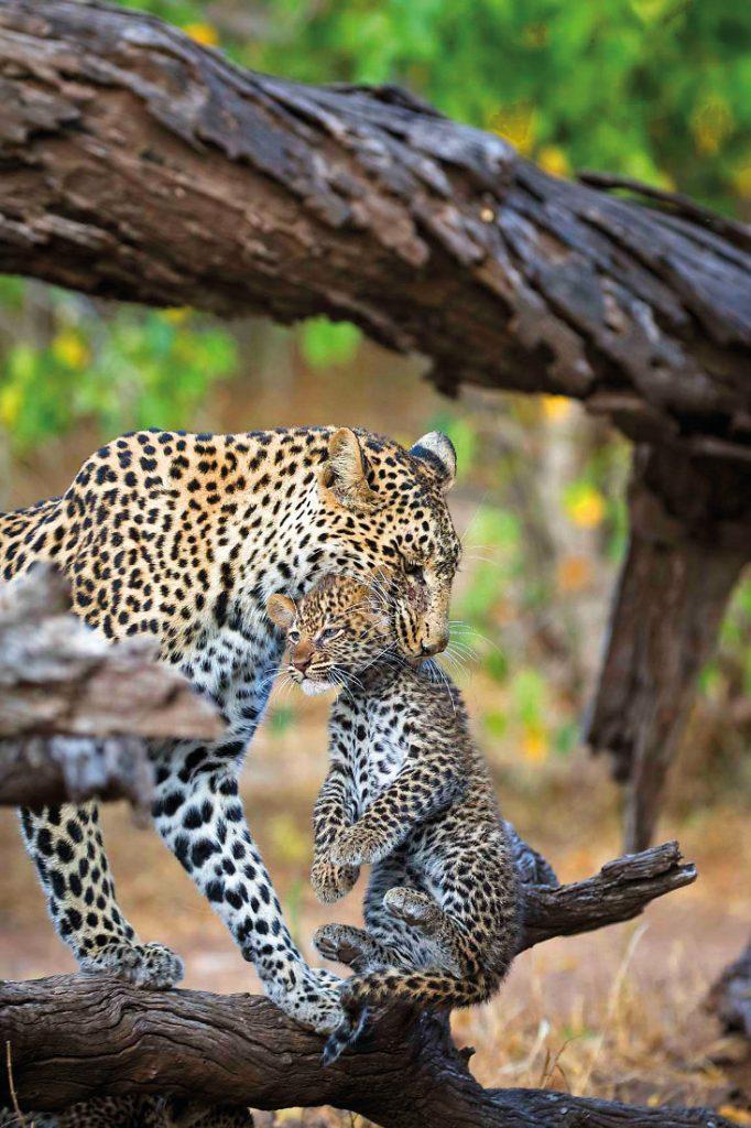 Botswana Mashatu Game Reserve Tented Camp Wildlife Iwanowskis Reisen - afrika.de