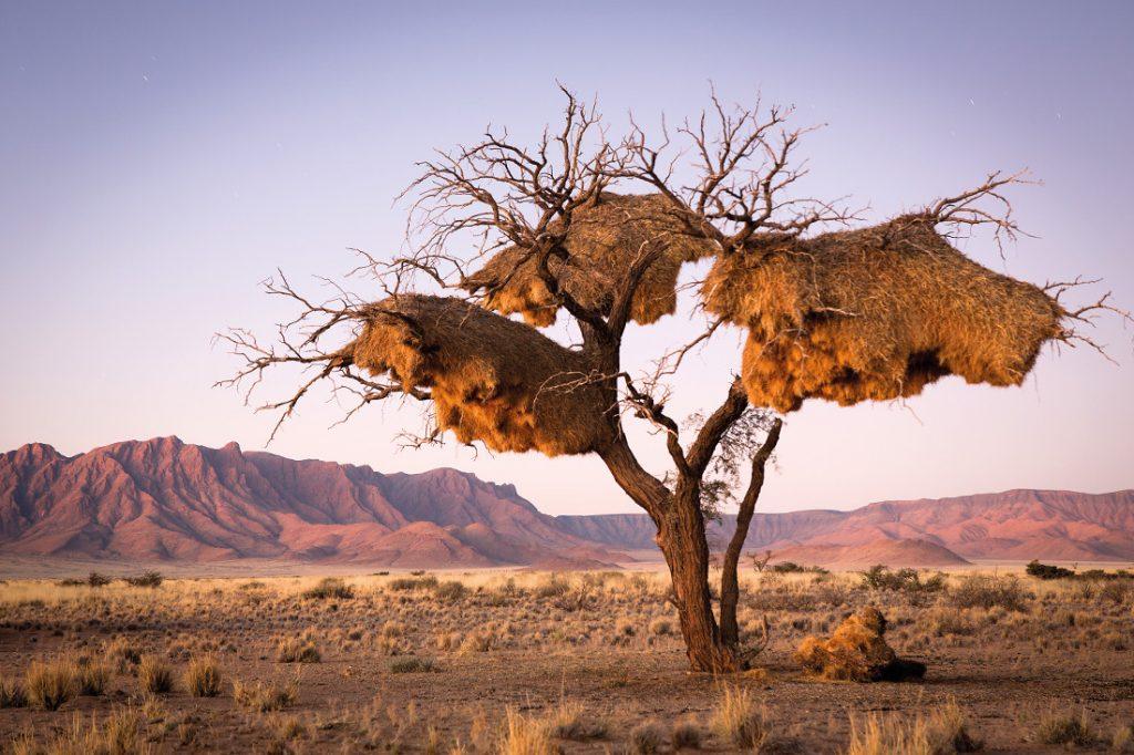 Namibia Sossusvlei Desert Lodge Webernest Iwanowskis Reisen - afrika.de