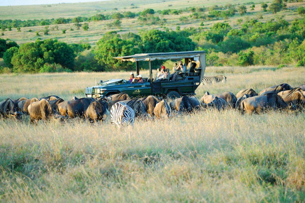 Kenia Masai Mara Ilkeliani Camp Pirschfahrt Iwanowskis Reisen - afrika.de