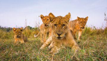 Naturwunder Sambia: Flug-/Lodge-Safari