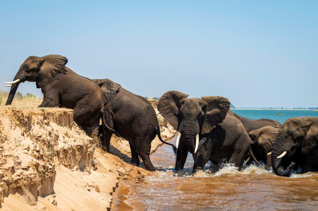 Simbabwe Mana Pools NP Little Ruckomechi Elefanten Iwanowskis Reisen - afrika.de