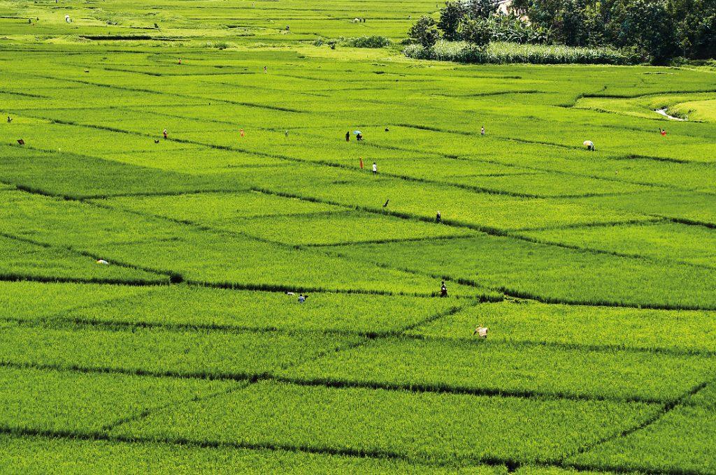 Ruanda Teeplantage Iwanowskis Reisen - afrika.de