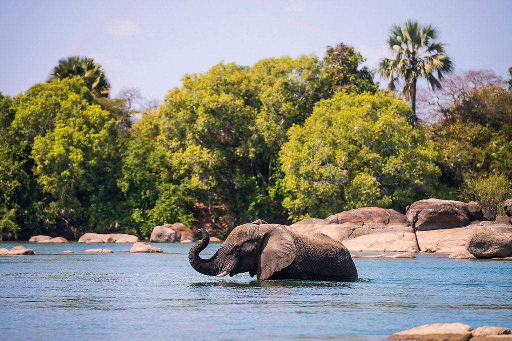 Sambia Kafue NP Kaingu Elefant Iwanowskis Reisen - afrika.de