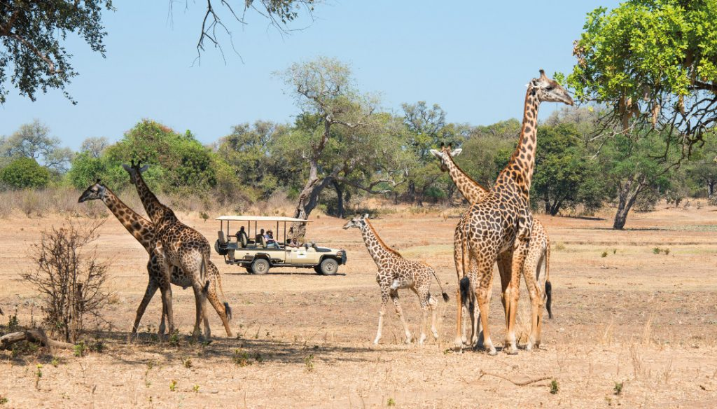 Sambia South Luangwa NP Puku Ridge Pischfahrt Iwanowskis Reisen - afrika.de