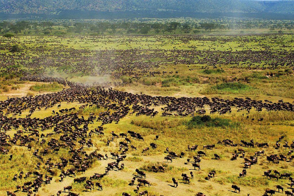 Tansania Serengeti Tierwanderung Iwanowskis Reisen - afrika.de