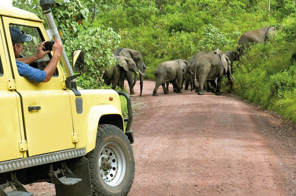 Tansania Selbstfahrertour Auto Elefanten Iwanowskis Reisen - afrika.de