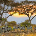 Tansania Tarangire National Park Iwanowskis Reisen - afrika.de