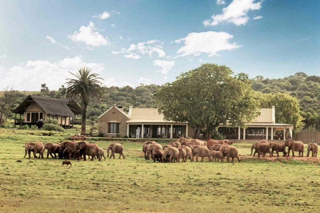 Südafrika Addo Elephant Park Gorah Elephant Camp Iwanowskis Reisen - afrika.de