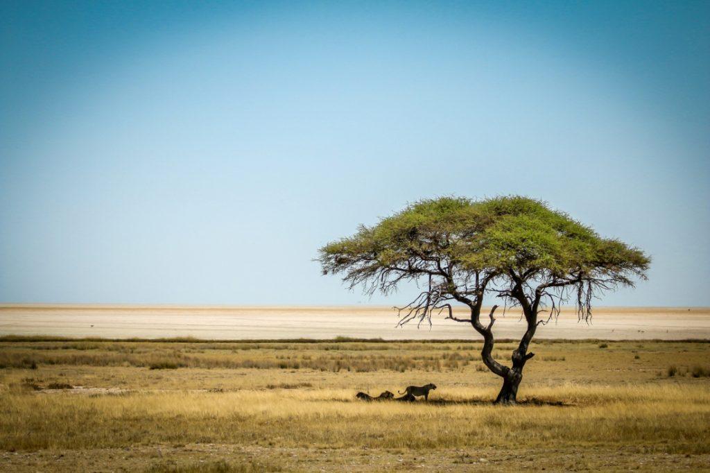 Namibia Etosha National Park Iwanowskis Reisen - afrika.de