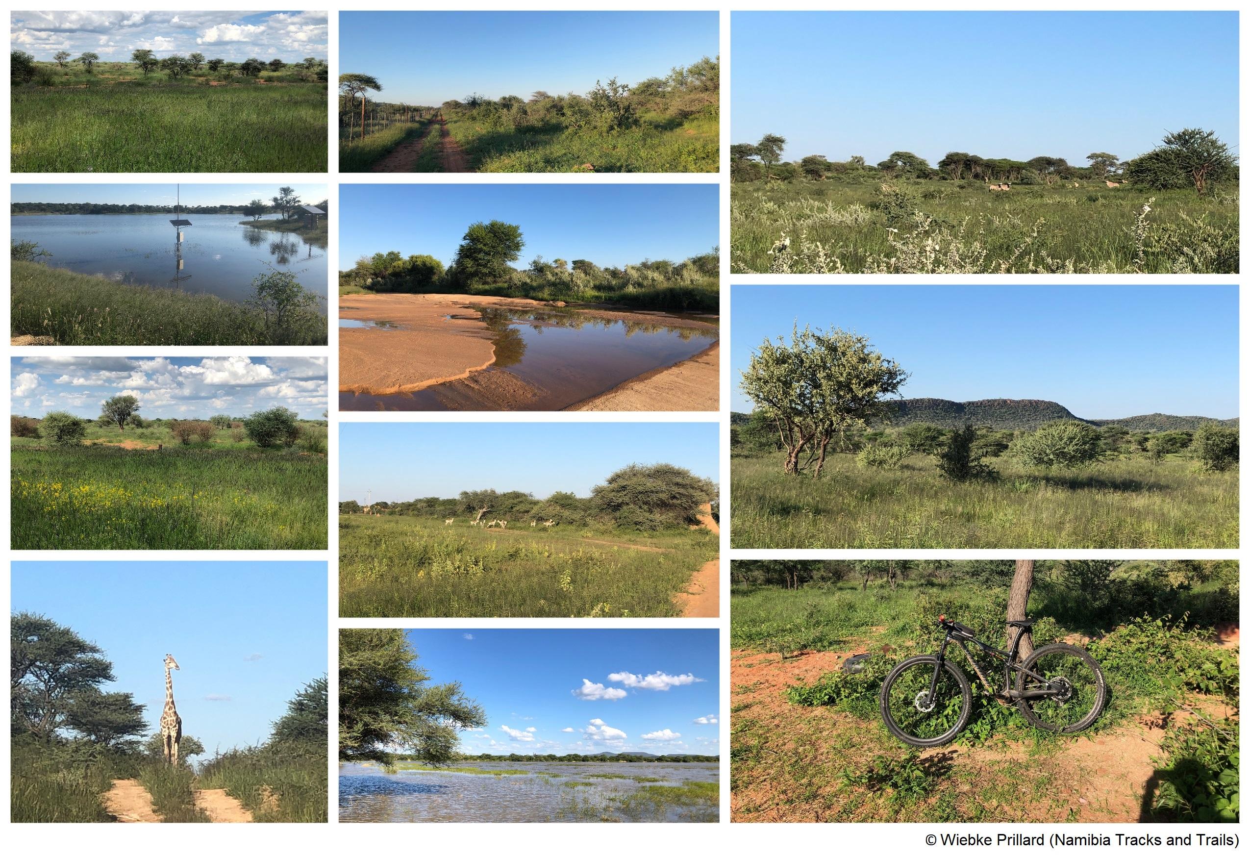 Die Bilder stammen von Wiebke Prillard (Namibia Tracks and Trails)