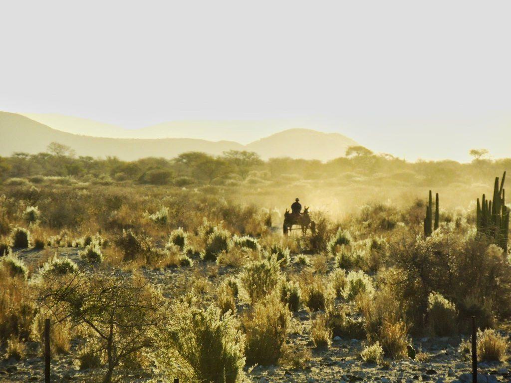 Namibia Dordabis Farm Heimat Sonnenuntergang Eselskarren Iwanowskis Reisen - afrika.de