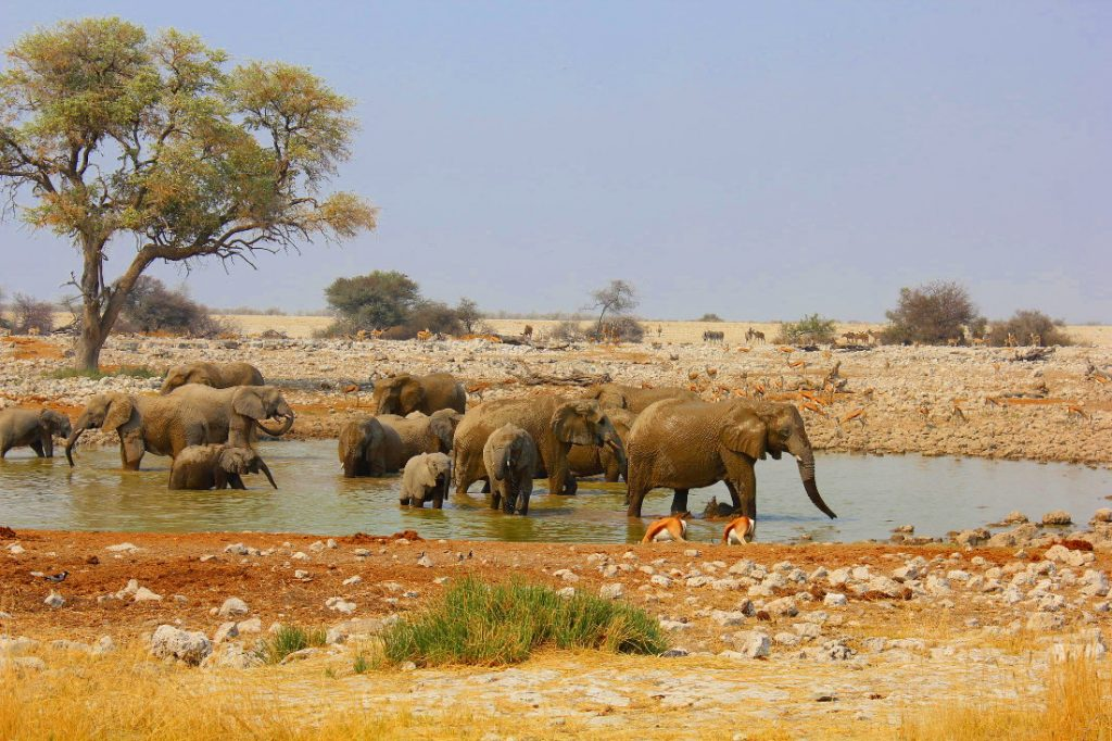 Namibia Etosha Oberland Lodge Wasserloch Elefanten Iwanowskis Reisen - afrika.de