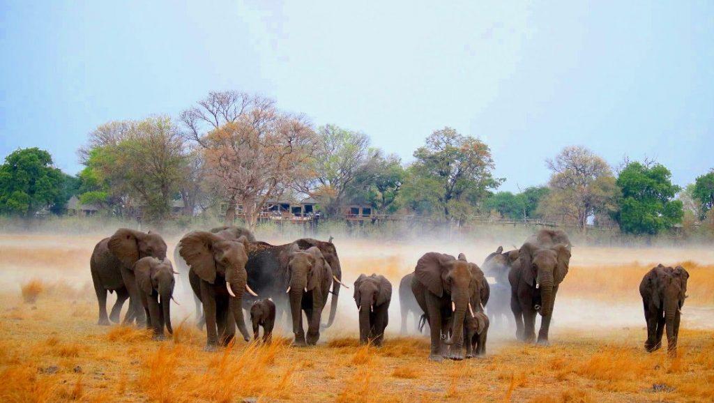 Namibia Bwabwata National Park Nambwa Tented Lodge Elefanten Iwanowskis Reisen - afrika.de