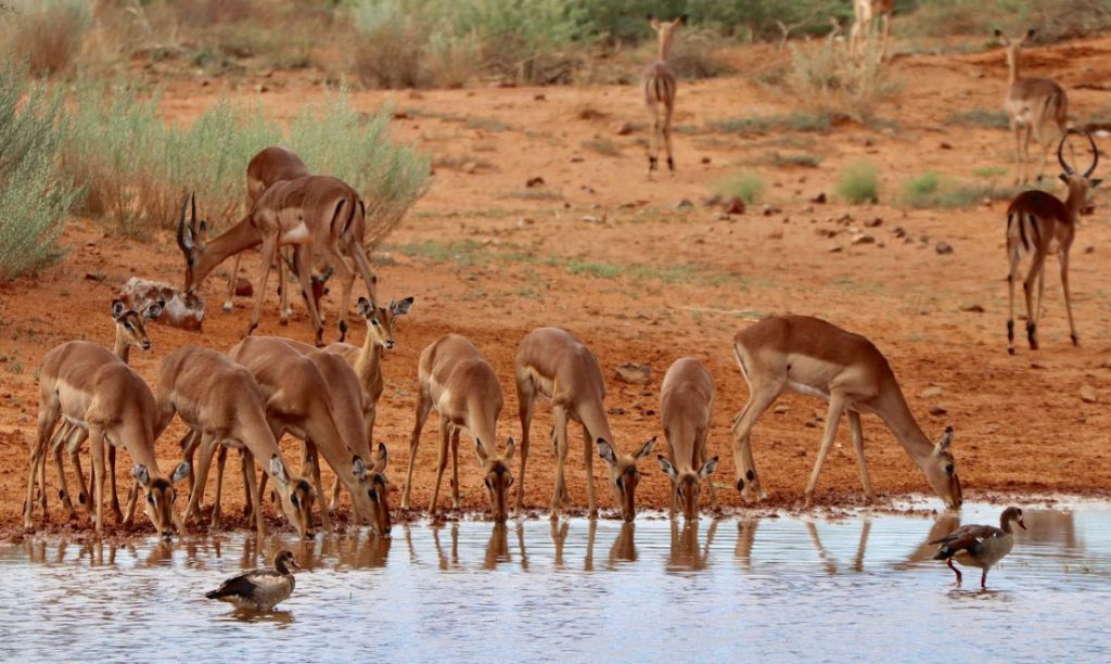 Namibia nahe Windhoek Okambara Elephant Lodge Wasserloch Iwanowskis Reisen - afrika.de
