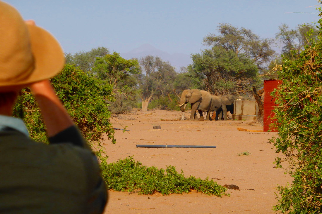 Namibia Twyfelfontein Adventure Camp Wüstenelefanten Iwanowskis Reisenen - afrika.de