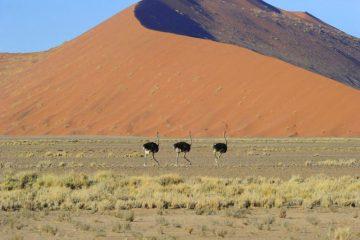 Namibia Sesriem Hoodia Desert Lodge Dünen Iwanowskis Reisen - afrika.de
