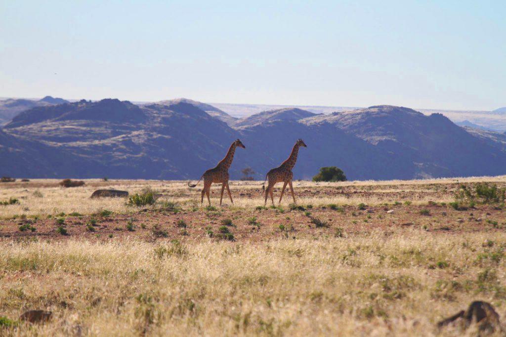 Namibia Sandfontein Lodge Naturreservat Iwanowskis Reisen - afrika.de