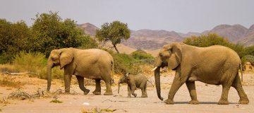 Namibia Skeleton Coast Park Shipwreck Lodge Wüstenelefanten Iwanowskis Reisen - afrika.de