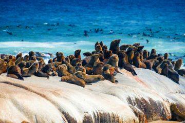 Namibia Skeleton Coast Park Shipwreck Lodge Robben Iwanowskis Reisen - afrika.de