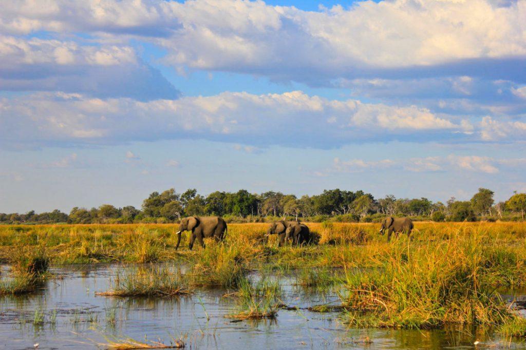 Namibia Caprivi Jackalberry Tented Camp Elefanten Iwanowskis Reisen - afrika.de