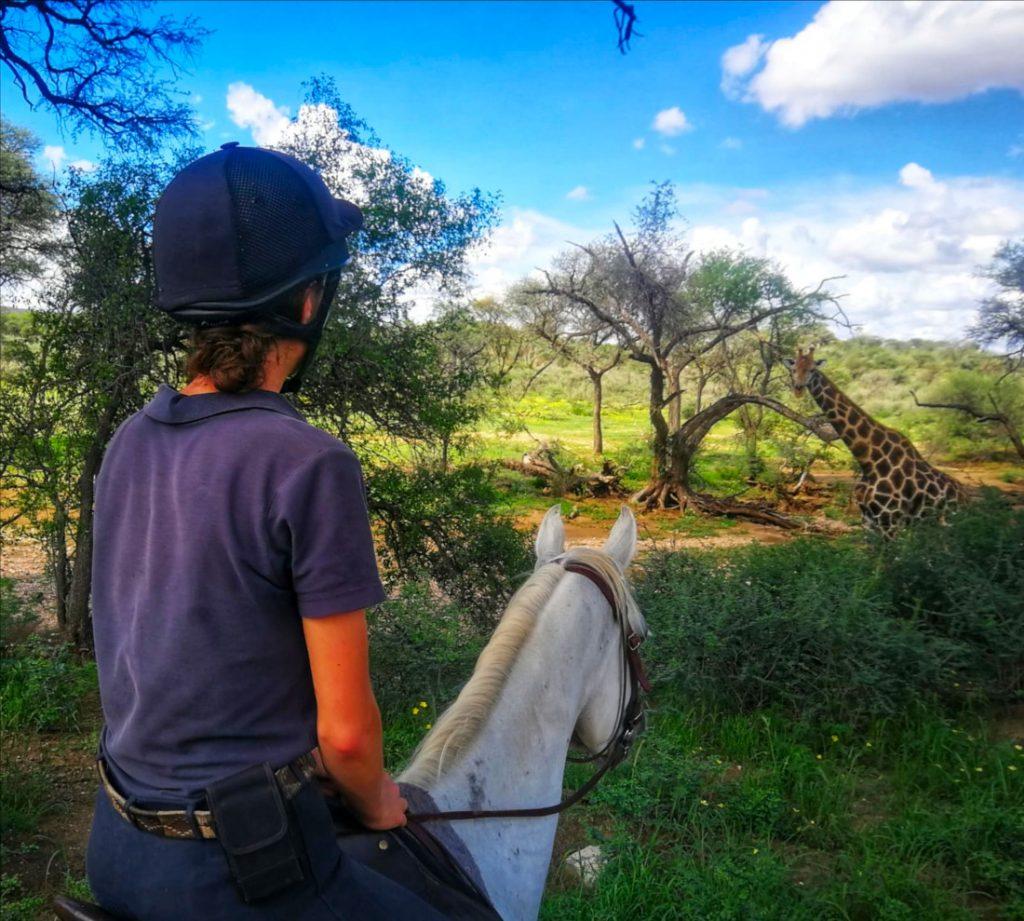 Namibia Windhoek Düsternbrook Gästefarm Kolonialhaus Ausritt Iwanowskis Reisen - afrika.de