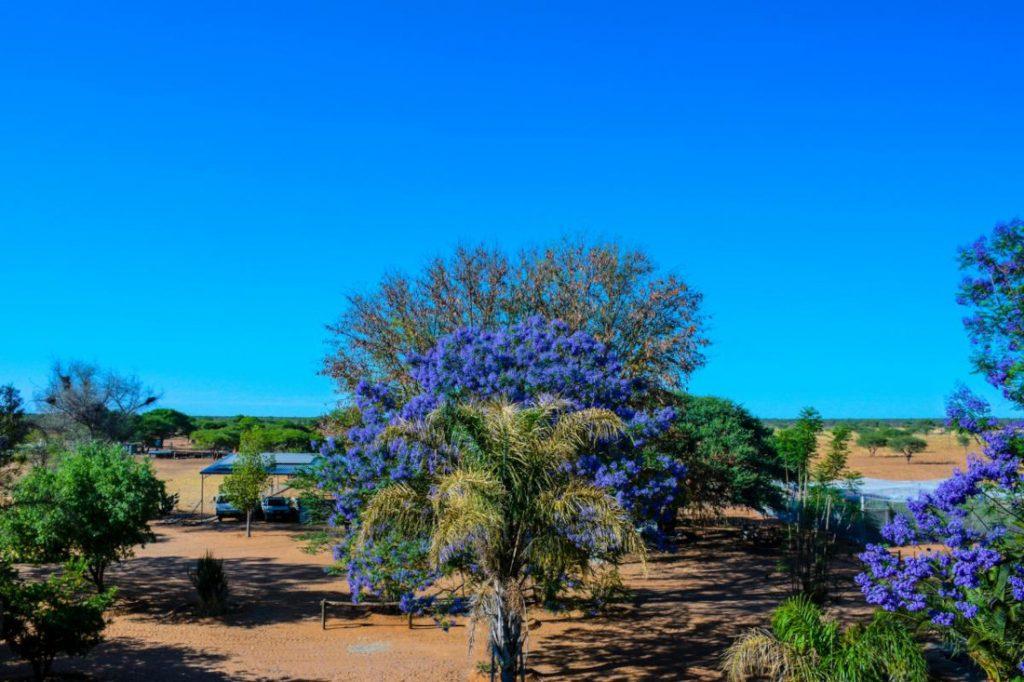 Namibia Otjiwarongo Ouhave Country Home Ausblick Iwanowskis Reisen - afrika.de