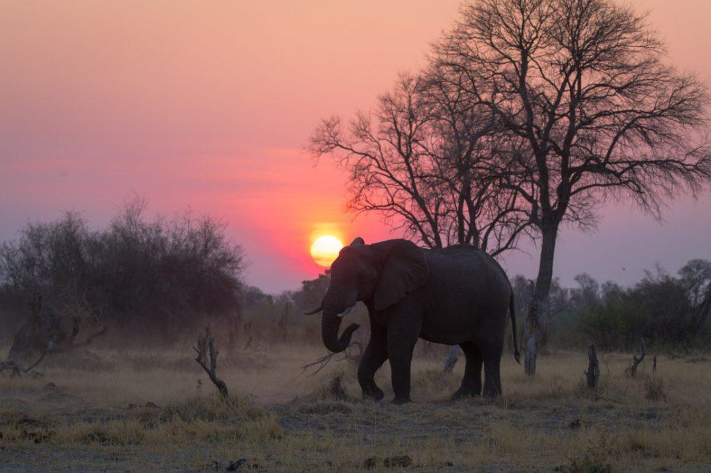 Botswana Okavango Delta Sonnenuntergang Elefant Iwanowskis Reisen - afrika.de