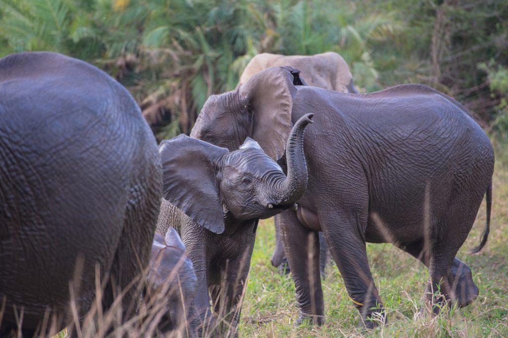 Südafrika Sunway Safaris Hluhluwe Game Reserve Elefanten Iwanowskis Reisen - afrika.de