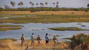 Botswana Pirschfahrt bei der Sandibe Okavango Safari Lodge - afrika.de