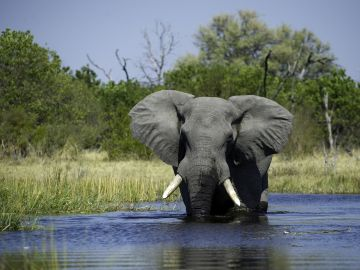 Botswana Safaris Reisen