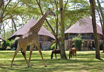 kenia safari kinder