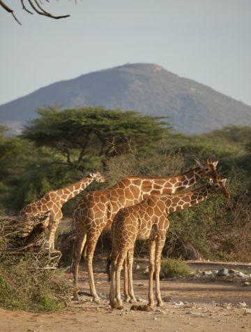 Kenia Flugsafari Lodges