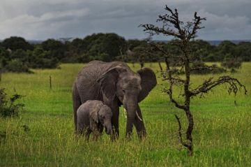 Kenia Reisen Safari