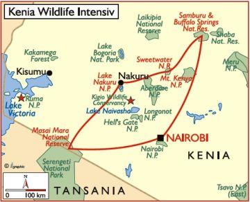 kenia reisen safaris