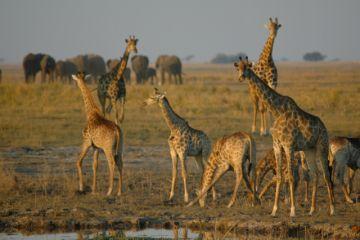 Namibia und Botswana Reisen