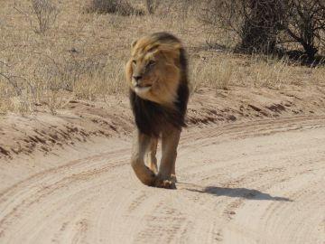 namibia selbstfahrer reisen