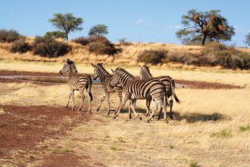 Wanderreise Namibia