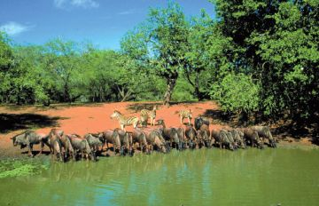 Südafrika Safari Unterkünfte